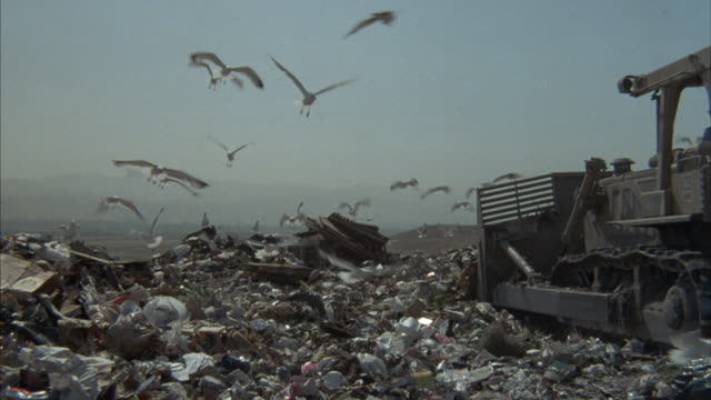 A flock of seagulls flies around a garbage dump.