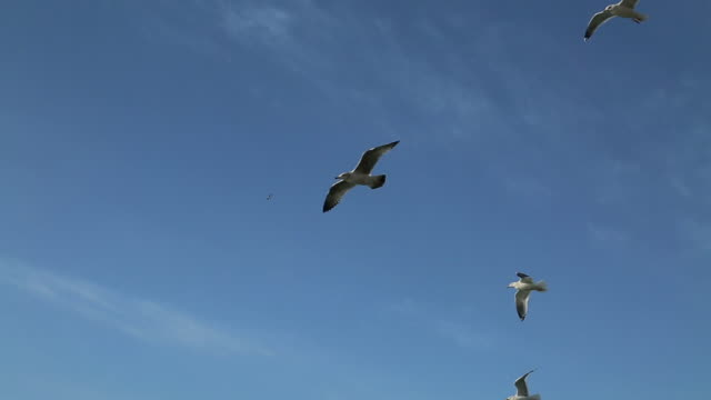 stockvideo's en b-roll-footage met flock of seagulls flying above the sea near bogildo island - meeuw