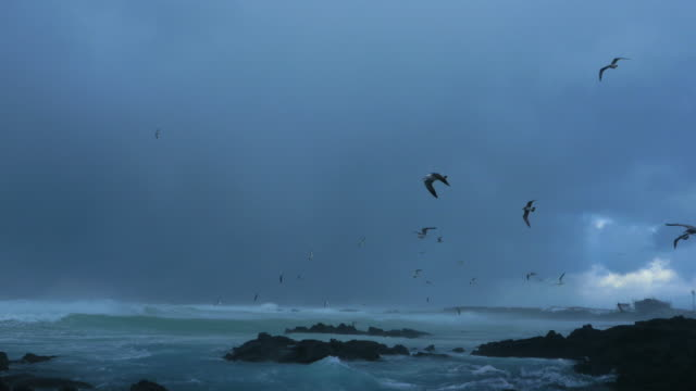 a flock of seagulls flying against the wind at a beach in stormy weather - overcast stock videos & royalty-free footage