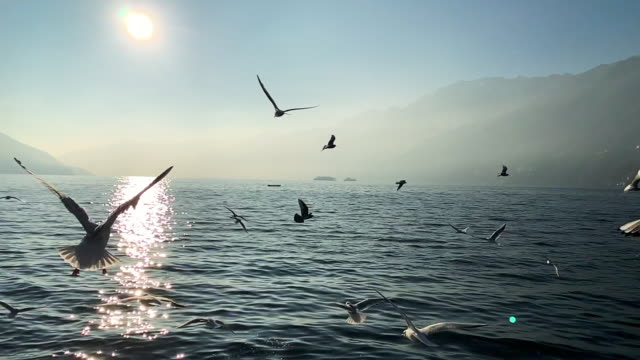 flock of seagulls flying on a foggy alpine lake with mountain - schweiz stock-videos und b-roll-filmmaterial
