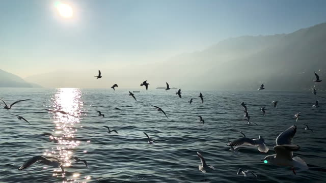 flock of seagulls flying on a foggy alpine lake with mountain - 大自然威力 個影片檔及 b 捲影像