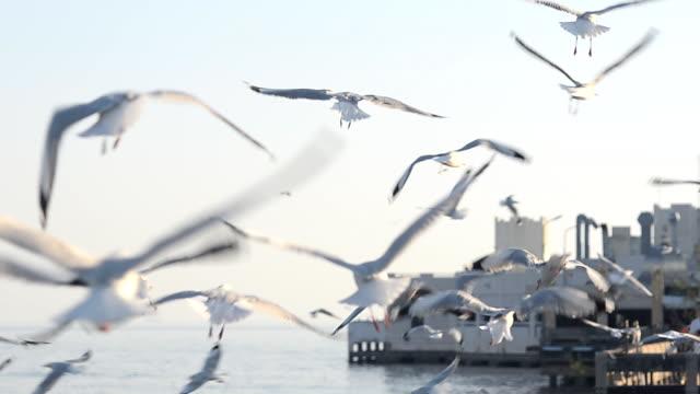 vidéos et rushes de volée de mouettes sur le port dans l'après-midi - mouette