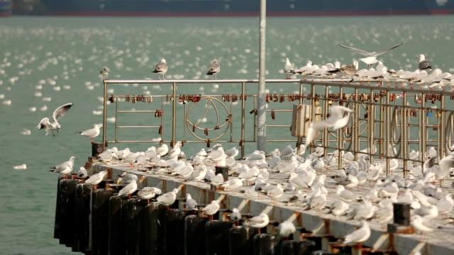 vídeos y material grabado en eventos de stock de bandada de gaviotas en el muelle de puerto - rebaño de oveja