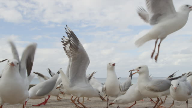 stockvideo's en b-roll-footage met flock of seagulls take flight - zeevogel