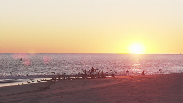 WS of flock of seagulls taking off in slow motion on beach at sunset.