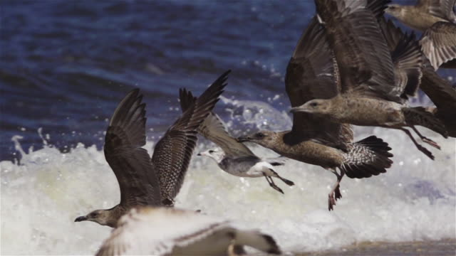 ms pan, flock of seagulls taking off on beach during the daytime. - sea water bird stock videos & royalty-free footage
