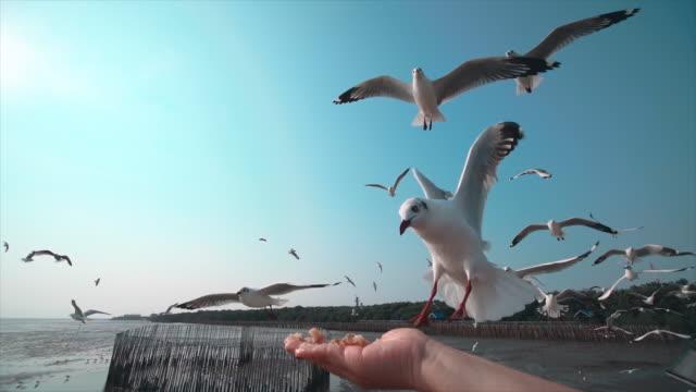 vídeos de stock, filmes e b-roll de slo mo um rebanho de gaivotas - céu claro
