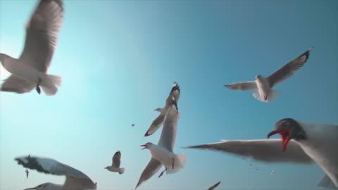 slo mo eine möwenherde - bird stock-videos und b-roll-filmmaterial