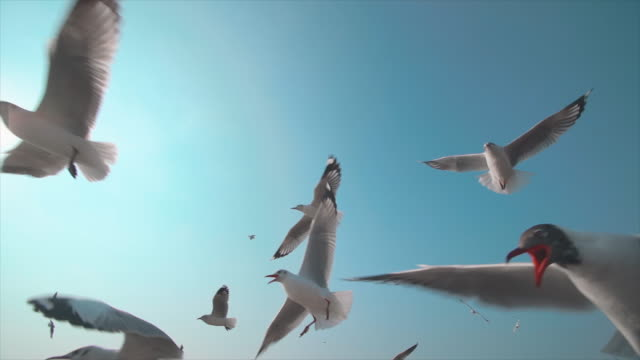 slo mo a flock of seagulls - mid air stock videos & royalty-free footage
