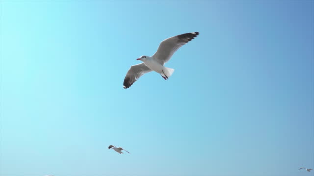 slo mo a flock of seagulls - seagull stock videos & royalty-free footage