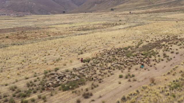 flock of sheep and shepherds in pazna municipality / poopo province, bolivia - 羊飼いの棒点の映像素材/bロール