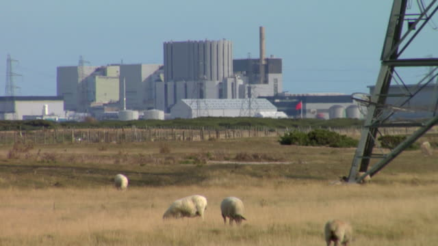 zo ws flock of sheep grazing on pasture near dungeness nuclear power station, electricity pylons in foreground, dungeness, kent, united kingdom - kernenergie stock-videos und b-roll-filmmaterial