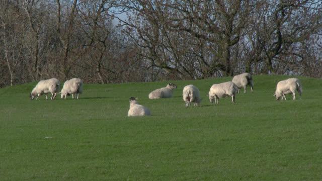 Troupeau de moutons dans un champ à Dumfries et Galloway, sud ouest Écosse