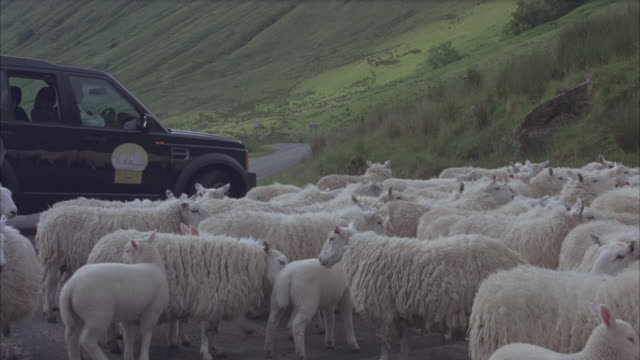 A flock of sheep surrounds a Land Rover, then a border collie runs down a hillside and disperses them.