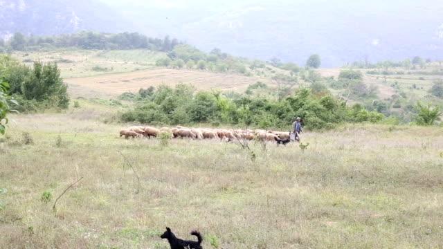 Schafherde mit einem Schäferhund