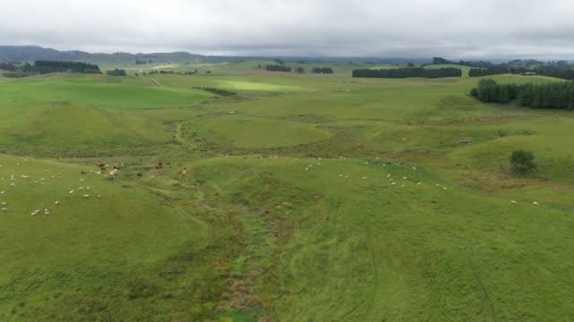 1/1n ニュージーランドのオハクネ州州道49号線の緑の農場で放牧する羊の群れ - sheep点の映像素材/bロール