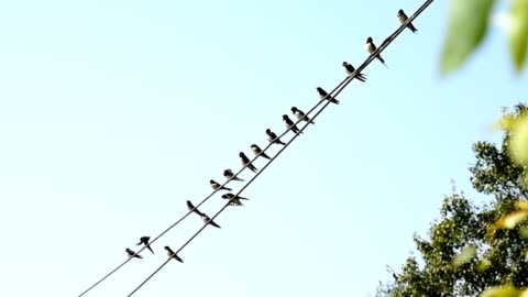 flock of swallows - perching stock videos & royalty-free footage