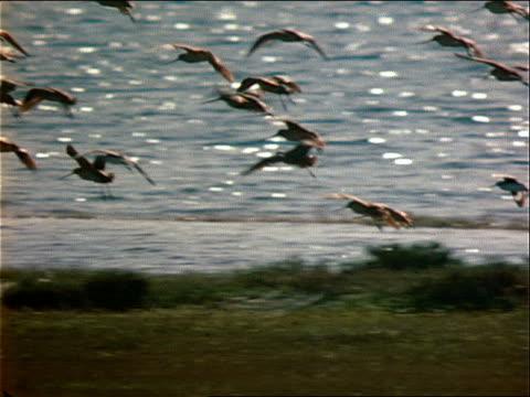 a flock of wild birds lands on the shoreline. - 水生植物点の映像素材/bロール