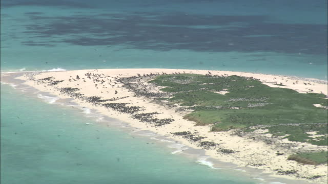 flocks of birds nest on an island above the great barrier reef. - seicht stock-videos und b-roll-filmmaterial