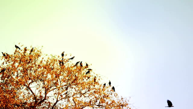 flocks of birds sitting on the tree - formation flying stock videos & royalty-free footage