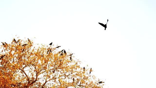 Flocks di uccelli seduta sull'albero