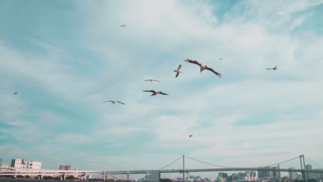 flocks of birds - seagull stock videos & royalty-free footage