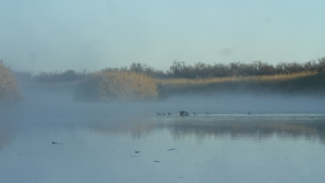 flocks of ducks in foggy river at central rio grande - 数匹の動物点の映像素材/bロール