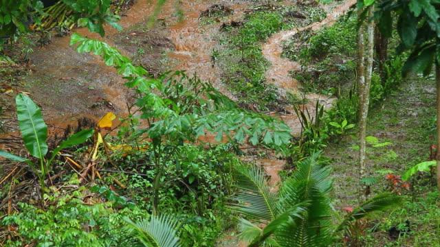Flood in garden