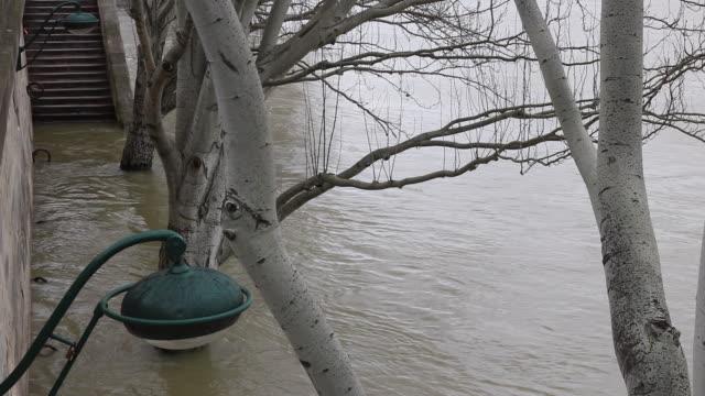 vidéos et rushes de flood in paris 2018, tree in the water - inondation