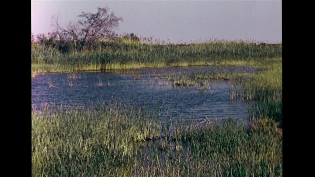 flooded bushland marshland vs various ducks species swimming on water ws herons perched fg many ducks soft bg europe provence rhone delta winter... - camargue stock-videos und b-roll-filmmaterial