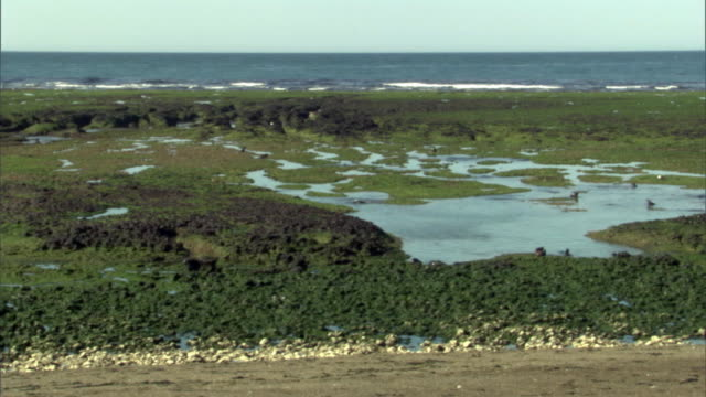 ws pan flooded marshland environment in valdes peninsula under blue sky / puerto madryn, chubut, argentina - provinz chubut stock-videos und b-roll-filmmaterial