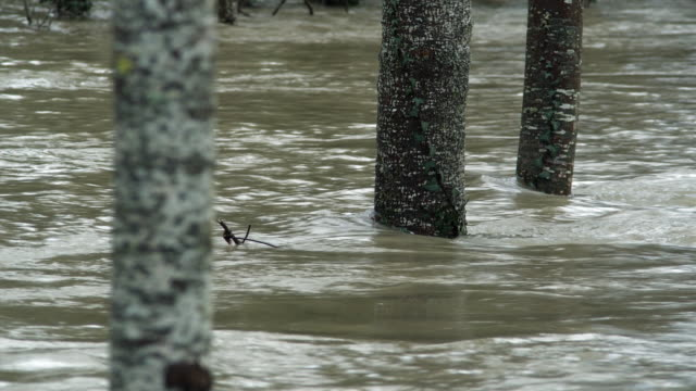 MS Flooded river with trees in water / Vitoria, Alava, Spain.