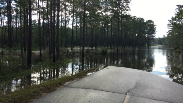 flooded road with water moving through forest, flooding road to bridge - florida us state stock videos & royalty-free footage