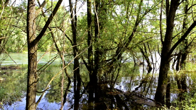 flooded trees in the forest - toned image stock videos & royalty-free footage