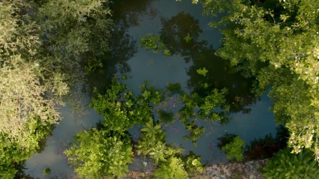 vidéos et rushes de arbres inondés - fantasmagorie