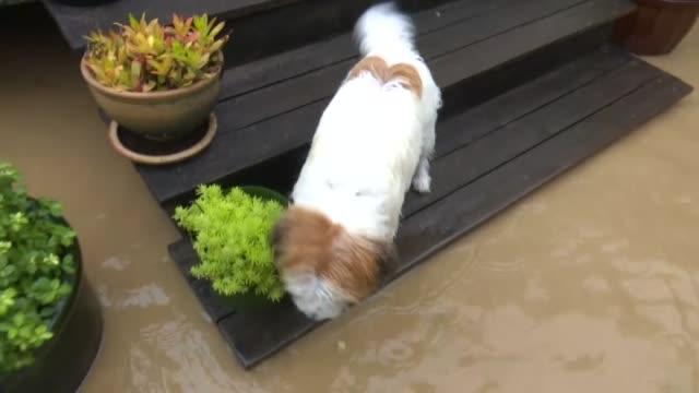 flooding in riwaka, near nelson, caused by cyclone gita. - vortex stock videos & royalty-free footage