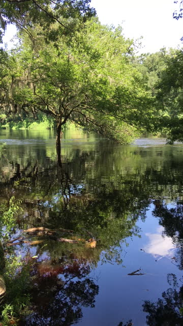 floodwaters in forest along the banks of the suwannee river - florida us state stock videos & royalty-free footage