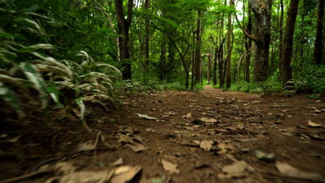 床のビュー: 北タイの熱帯林にトレイルを歩いて - アノニマス点の映像素材/bロール