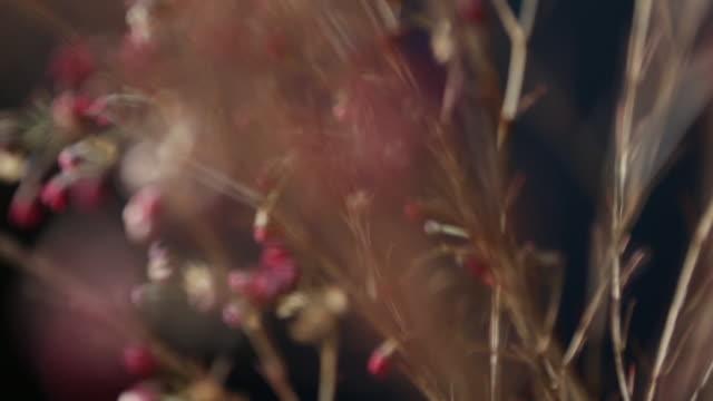 flora - ソフトフォーカス点の映像素材/bロール
