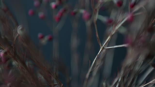 flora - kvist bildbanksvideor och videomaterial från bakom kulisserna