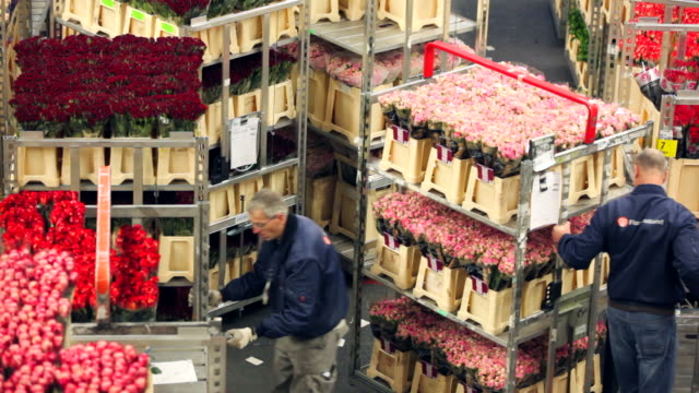 floraholland, largest flower auction in the world, aalsmeer, netherlands - auction stock videos & royalty-free footage