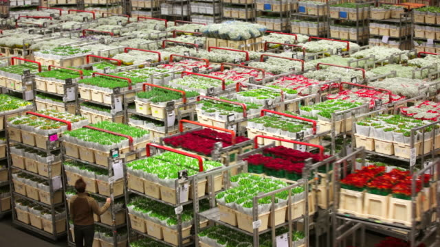 floraholland, largest flower auction in the world, aalsmeer, netherlands - auction stock videos and b-roll footage