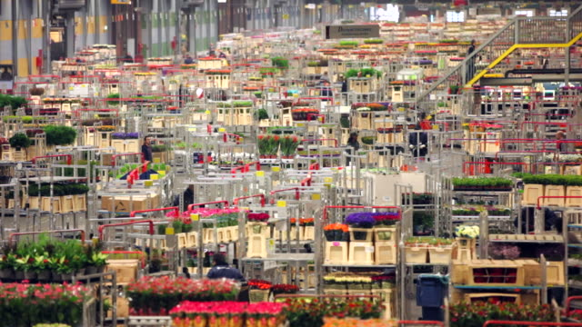 floraholland, largest flower auction in the world, aalsmeer, netherlands - economy stock videos & royalty-free footage