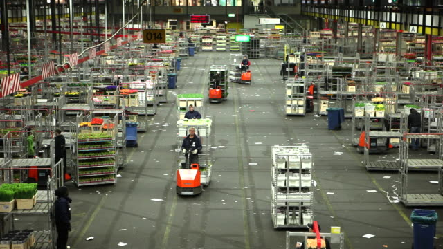 floraholland, largest flower auction in the world, time-lapse. aalsmeer, netherlands - auction stock videos and b-roll footage