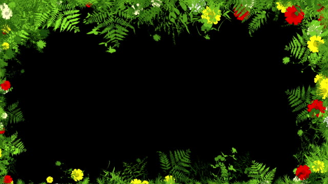 floral frame - tropical rainforest stock videos & royalty-free footage