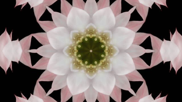floral mandala on black background - mandala stock videos & royalty-free footage