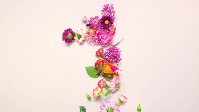 floral number 1 bouncing and splattering on beige and white backgrounds - flower head stock videos & royalty-free footage