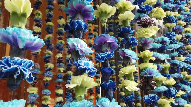 floral window display at the bulgari store near sloane square as businesses unveil this years creations in support of the chelsea flower show on may... - festival dei fiori di chelsea video stock e b–roll