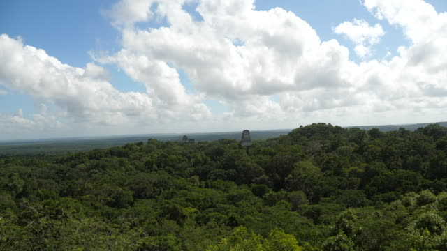 flores, tikal -the rainforest canopy, as seen from the top of temple iv. the main square and temple iii are seen above the trees, guatemala. - mayan stock videos & royalty-free footage
