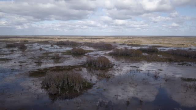 florida everglades aerial view - american alligator stock videos & royalty-free footage